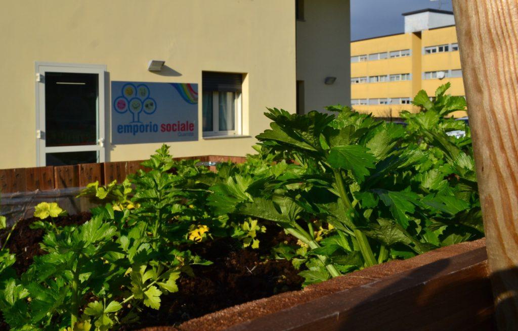 piante verdi nell'orto dell'emporio sociale