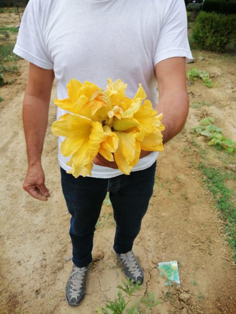 fiori di zucca
